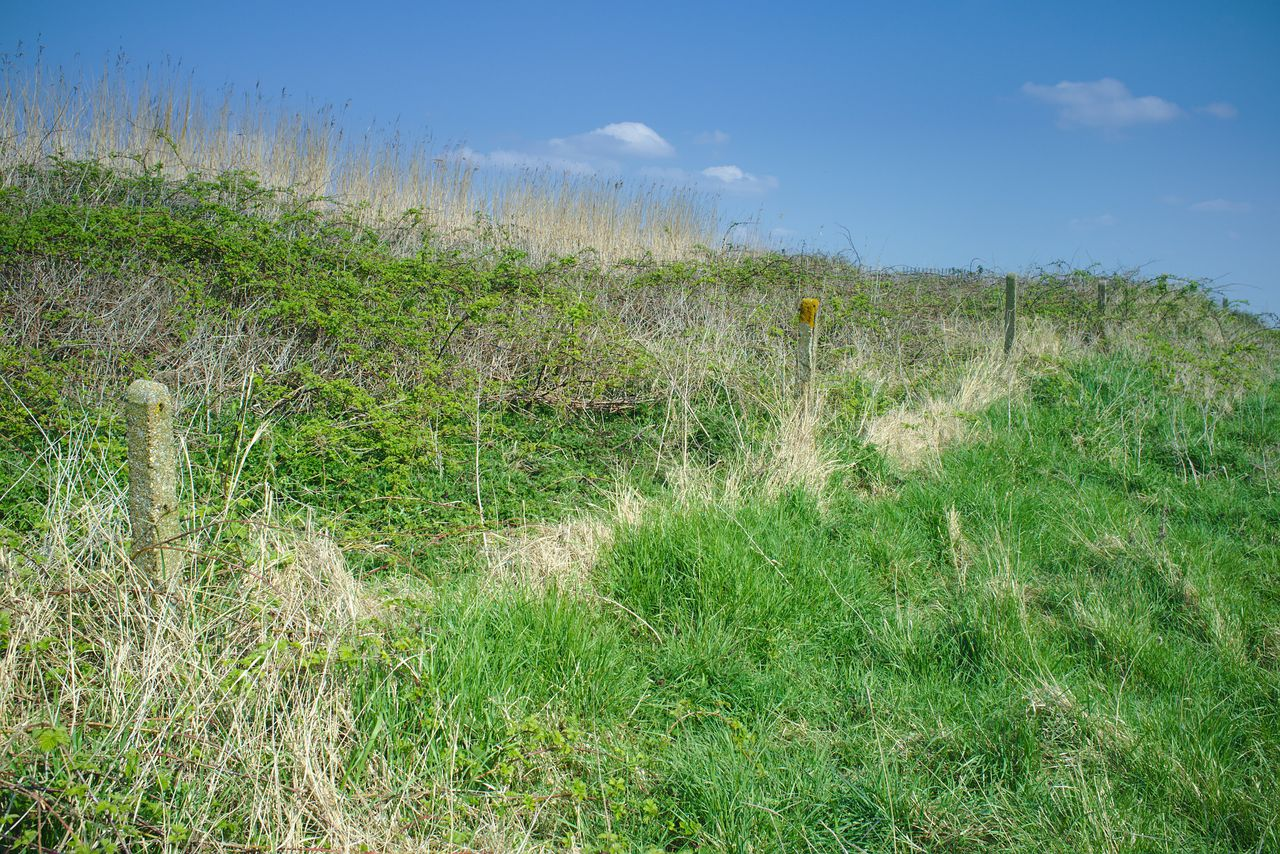 A line of old railway fence posts, sitting at the bottom of a former, somewhat-eroded embankment